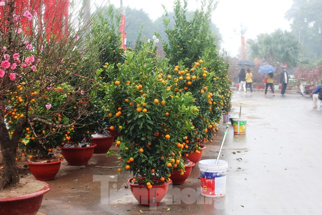 Chợ hoa dịp cận Tết và nỗi lòng người bán khi dịch COVID-19 bùng phát ảnh 14