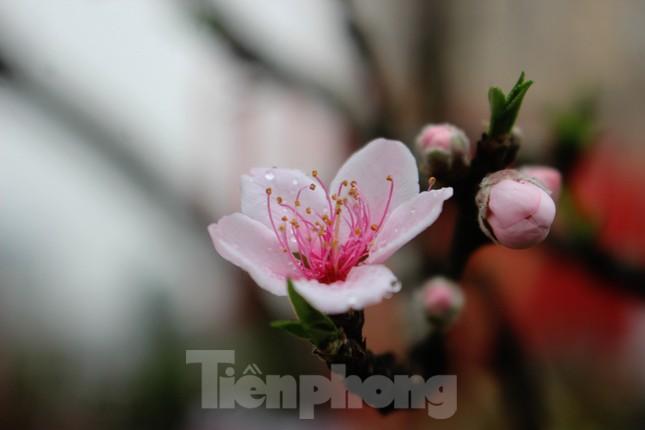 Chợ hoa dịp cận Tết và nỗi lòng người bán khi dịch COVID-19 bùng phát ảnh 5