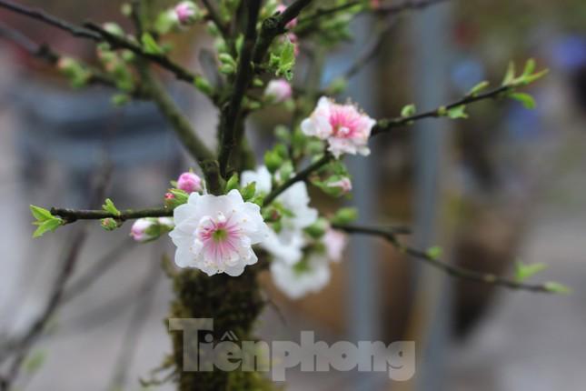 Chợ hoa dịp cận Tết và nỗi lòng người bán khi dịch COVID-19 bùng phát ảnh 10