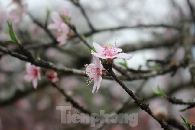 Chợ hoa dịp cận Tết và nỗi lòng người bán khi dịch COVID-19 bùng phát ảnh 6