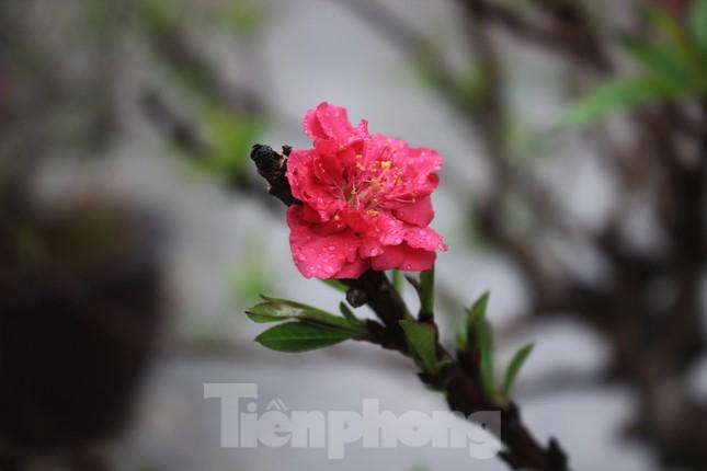 Chợ hoa dịp cận Tết và nỗi lòng người bán khi dịch COVID-19 bùng phát ảnh 8