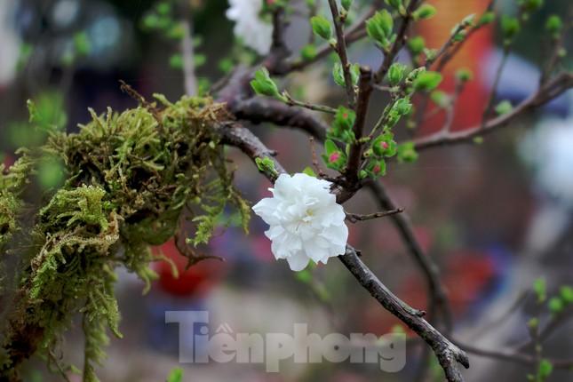 Chợ hoa dịp cận Tết và nỗi lòng người bán khi dịch COVID-19 bùng phát ảnh 11