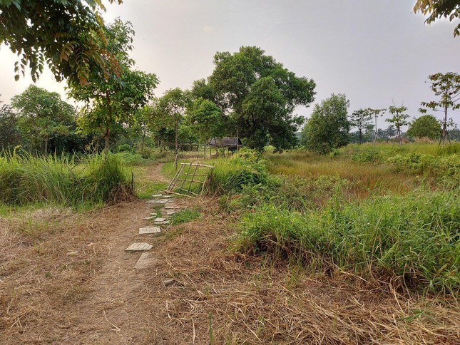 Cận cảnh công viên Văn hóa đầu tư gần 100 tỷ đồng thành 'cánh đồng hoang' ảnh 3