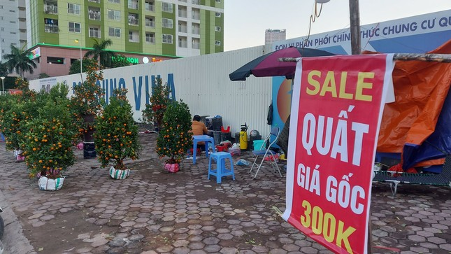 Người bán đồng loạt treo biển giảm giá, 'xả' cây và hoa ngày cuối năm ảnh 8