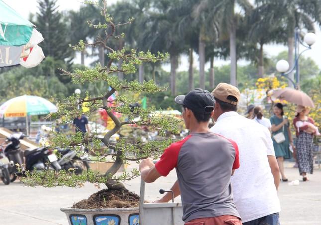 Đà Nẵng: Hoa mai thi nhau 'cười', người bán mếu ảnh 11
