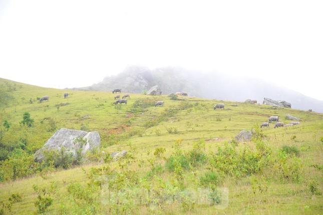 Mê mẩn vẻ đẹp thảo nguyên xanh mướt với những khối đá kỳ lạ ở Bắc Giang ảnh 3