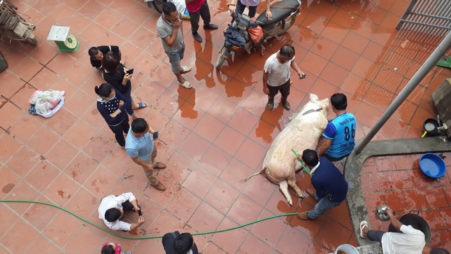 Giá tăng kỷ lục, người dân quê vẫn tưng bừng đụng lợn đón Tết ảnh 1