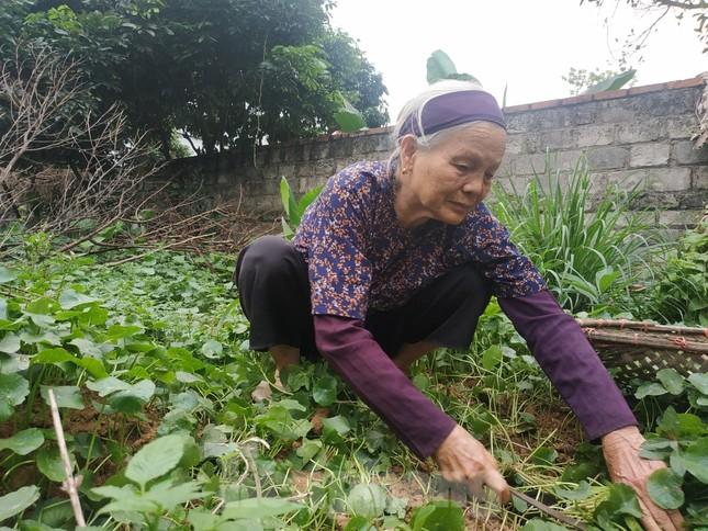 Cụ bà bán rau 79 tuổi ủng hộ tiền chống dịch COVID -19 ảnh 1