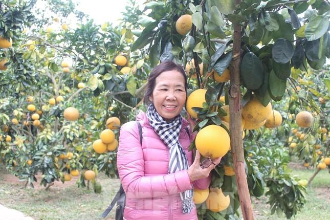 Mãn nhãn vườn cây quả vàng rực rỡ trước Tết ở Bắc Giang ảnh 6