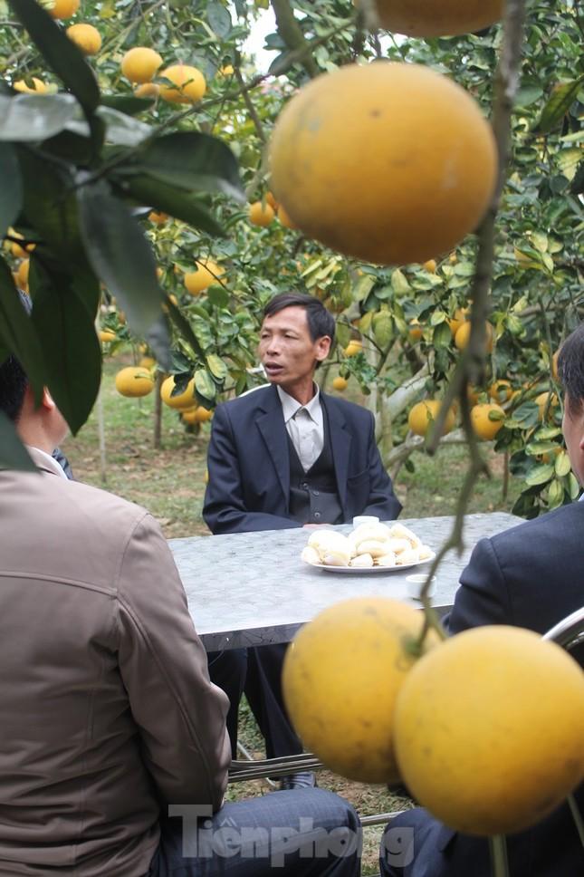 Mãn nhãn vườn cây quả vàng rực rỡ trước Tết ở Bắc Giang ảnh 7