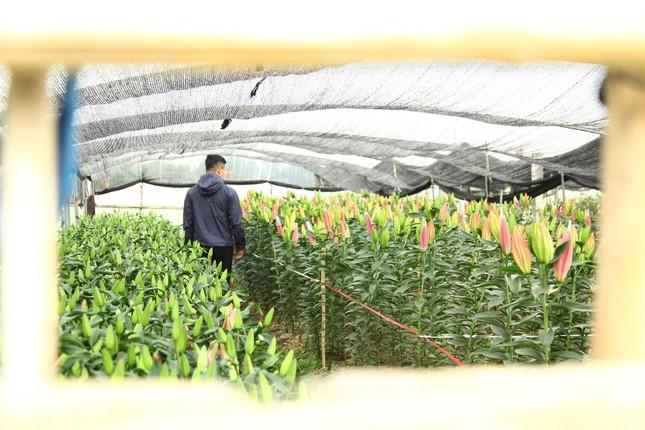 Nông dân vựa hoa ly lớn nhất Bắc Giang lo gặp cảnh 'hoa cười, người khóc' ảnh 10