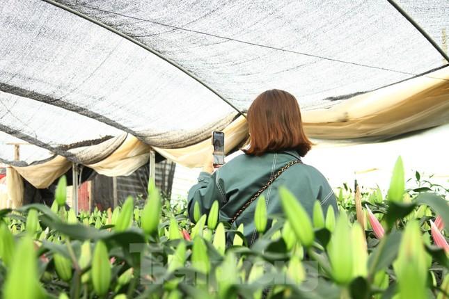 Nông dân vựa hoa ly lớn nhất Bắc Giang lo gặp cảnh 'hoa cười, người khóc' ảnh 9