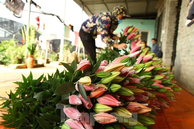 Nông dân vựa hoa ly lớn nhất Bắc Giang lo gặp cảnh 'hoa cười, người khóc' ảnh 15