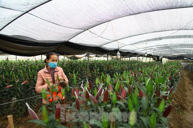 Nông dân vựa hoa ly lớn nhất Bắc Giang lo gặp cảnh 'hoa cười, người khóc' ảnh 12