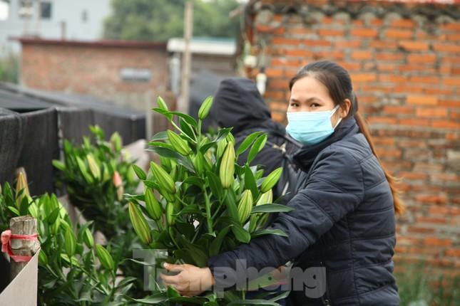 Nông dân vựa hoa ly lớn nhất Bắc Giang lo gặp cảnh 'hoa cười, người khóc' ảnh 7