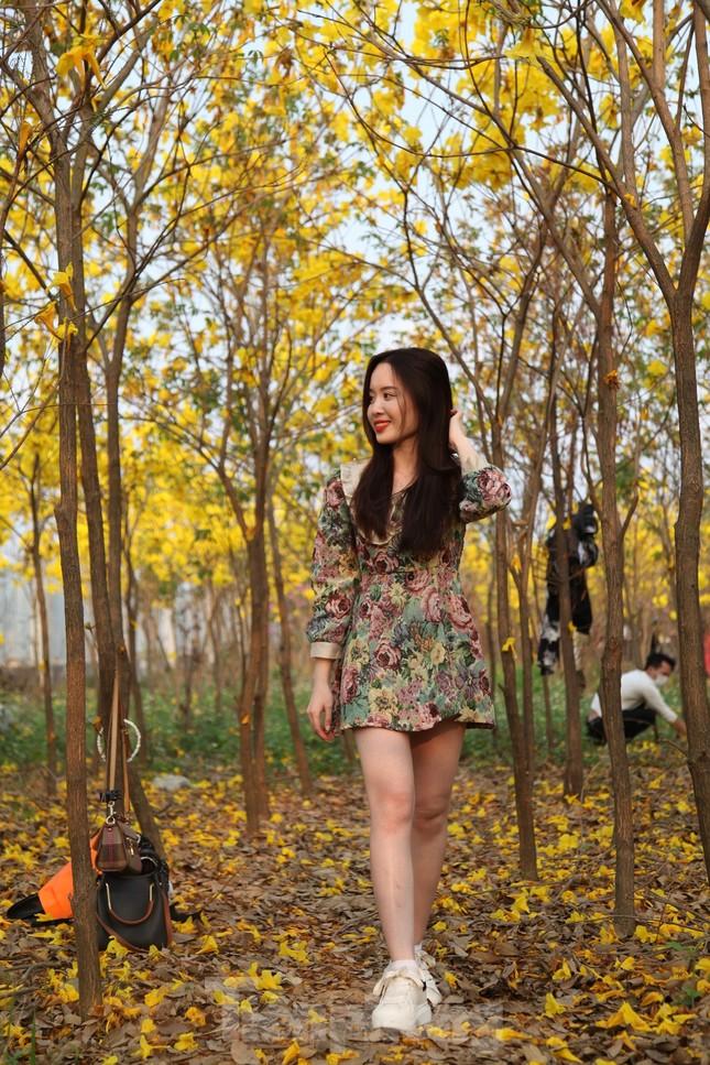 Nghìn người đổ về chiêm ngưỡng vườn hoa Phong Linh vàng rực rỡ ở Bắc Giang ảnh 5