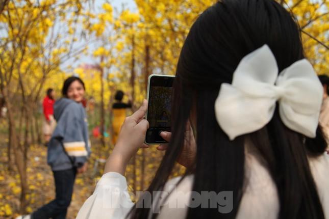 Nghìn người đổ về chiêm ngưỡng vườn hoa Phong Linh vàng rực rỡ ở Bắc Giang ảnh 3
