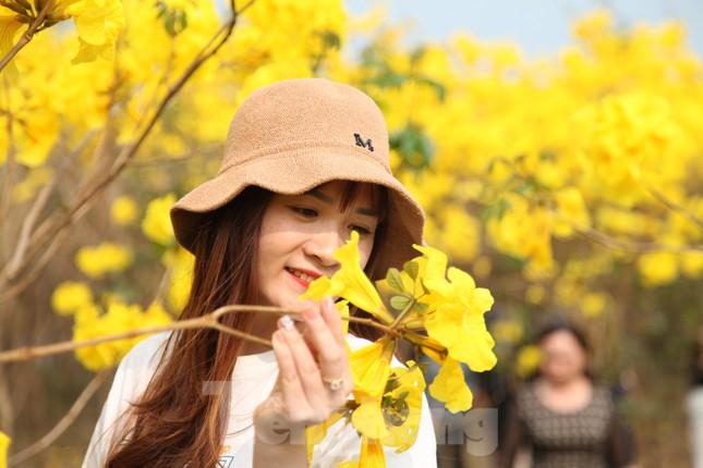 Nghìn người đổ về chiêm ngưỡng vườn hoa Phong Linh vàng rực rỡ ở Bắc Giang ảnh 12