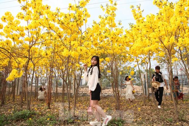 Nghìn người đổ về chiêm ngưỡng vườn hoa Phong Linh vàng rực rỡ ở Bắc Giang ảnh 2