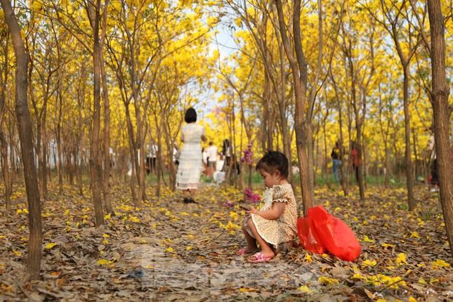 Nghìn người đổ về chiêm ngưỡng vườn hoa Phong Linh vàng rực rỡ ở Bắc Giang ảnh 4