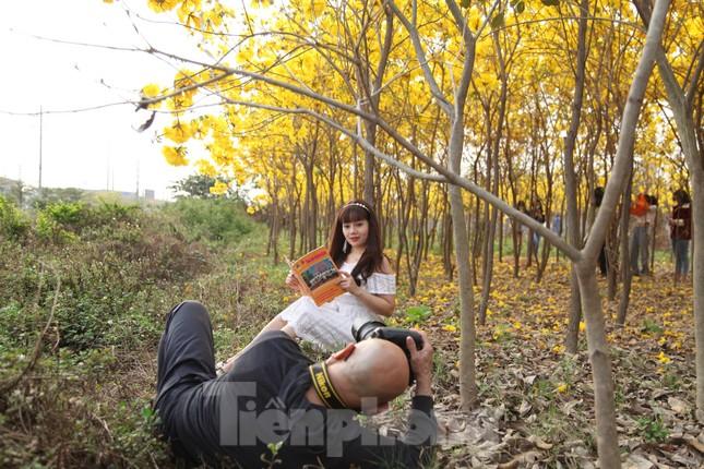 Nghìn người đổ về chiêm ngưỡng vườn hoa Phong Linh vàng rực rỡ ở Bắc Giang ảnh 7