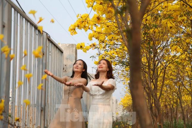 Nghìn người đổ về chiêm ngưỡng vườn hoa Phong Linh vàng rực rỡ ở Bắc Giang ảnh 8