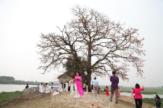 Dòng người tấp nập đổ về chiêm ngưỡng cây gạo cổ thụ ở Bắc Giang ảnh 1