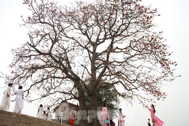 Dòng người tấp nập đổ về chiêm ngưỡng cây gạo cổ thụ ở Bắc Giang ảnh 6