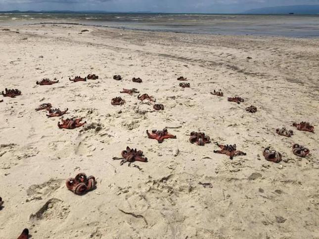 """Sao biển ở Phú Quốc chết khô la liệt trên bờ biển do nhiều du khách bắt để """"check-in""""? ảnh 3"""