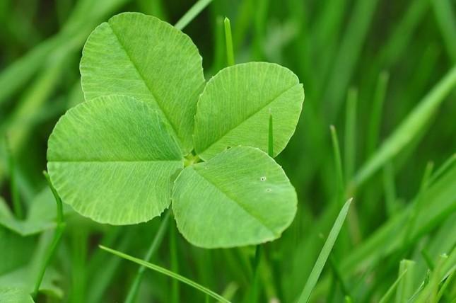 May mắn là một khả năng có thể học hỏi, và đây là cách giúp bạn nắm bắt may mắn của mình ảnh 2