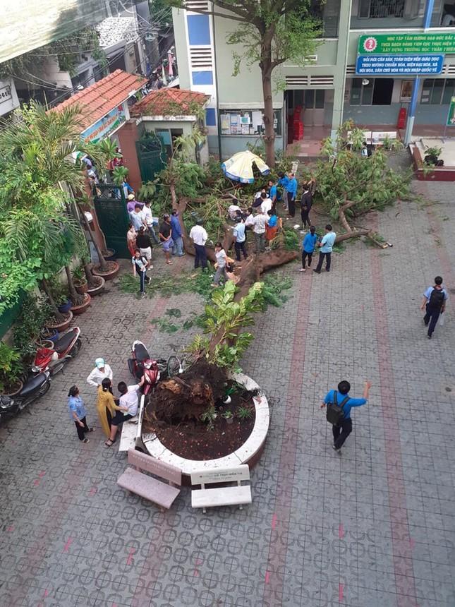 Từ sự cố cây đổ khiến học sinh tử vong, ghi lại ngay các quy tắc an toàn mùa mưa bão! ảnh 2