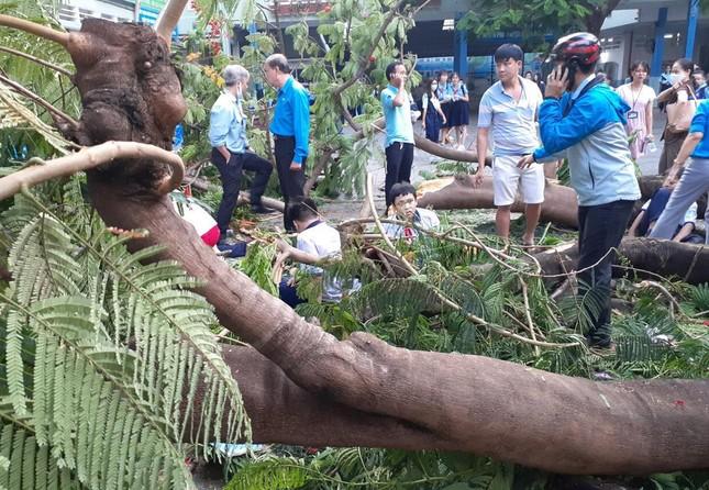 Từ sự cố cây đổ khiến học sinh tử vong, ghi lại ngay các quy tắc an toàn mùa mưa bão! ảnh 1