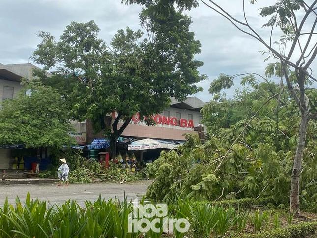 """Xót xa """"cây Mắt Biếc"""" trơ trụi sau bão số 5, khắp thành phố Huế ngổn ngang cây đổ ảnh 12"""