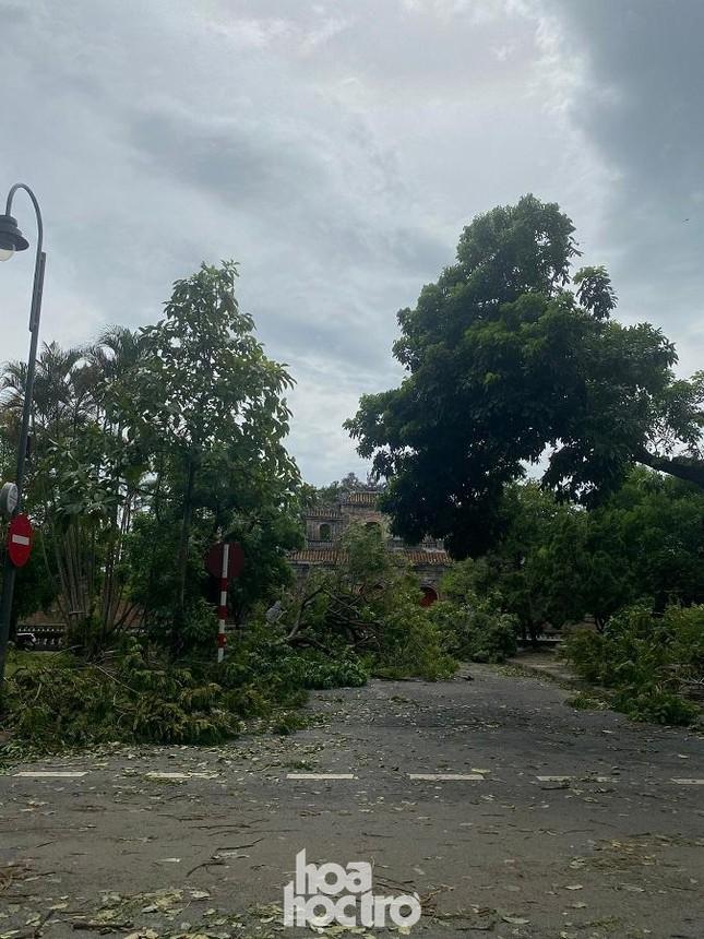 """Xót xa """"cây Mắt Biếc"""" trơ trụi sau bão số 5, khắp thành phố Huế ngổn ngang cây đổ ảnh 13"""