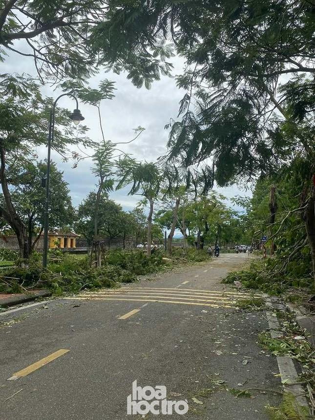 """Xót xa """"cây Mắt Biếc"""" trơ trụi sau bão số 5, khắp thành phố Huế ngổn ngang cây đổ ảnh 7"""