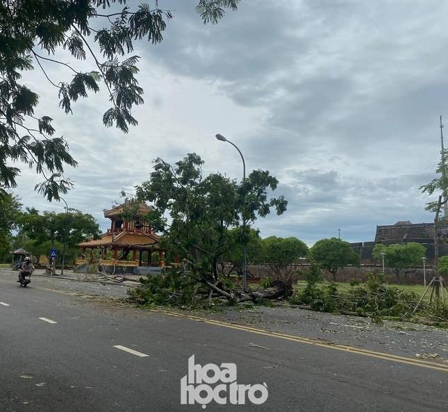 """Xót xa """"cây Mắt Biếc"""" trơ trụi sau bão số 5, khắp thành phố Huế ngổn ngang cây đổ ảnh 2"""