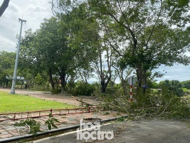 """Xót xa """"cây Mắt Biếc"""" trơ trụi sau bão số 5, khắp thành phố Huế ngổn ngang cây đổ ảnh 6"""