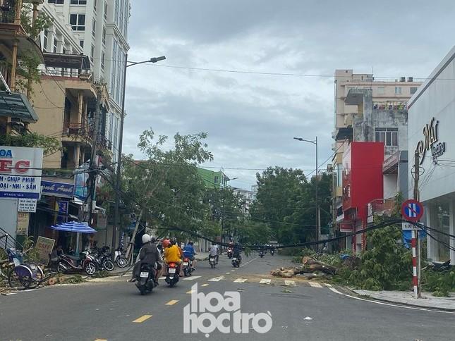 """Xót xa """"cây Mắt Biếc"""" trơ trụi sau bão số 5, khắp thành phố Huế ngổn ngang cây đổ ảnh 3"""