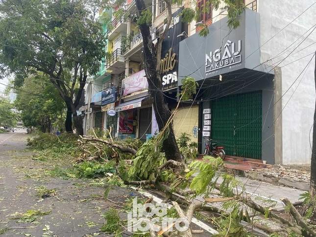 """Xót xa """"cây Mắt Biếc"""" trơ trụi sau bão số 5, khắp thành phố Huế ngổn ngang cây đổ ảnh 4"""