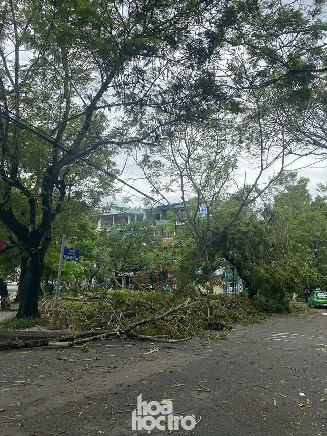 """Xót xa """"cây Mắt Biếc"""" trơ trụi sau bão số 5, khắp thành phố Huế ngổn ngang cây đổ ảnh 1"""