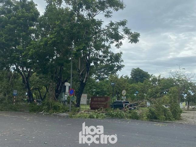 """Xót xa """"cây Mắt Biếc"""" trơ trụi sau bão số 5, khắp thành phố Huế ngổn ngang cây đổ ảnh 8"""