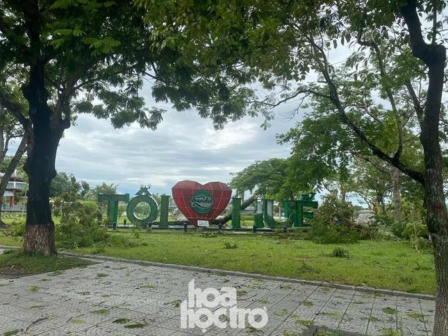 """Xót xa """"cây Mắt Biếc"""" trơ trụi sau bão số 5, khắp thành phố Huế ngổn ngang cây đổ ảnh 10"""
