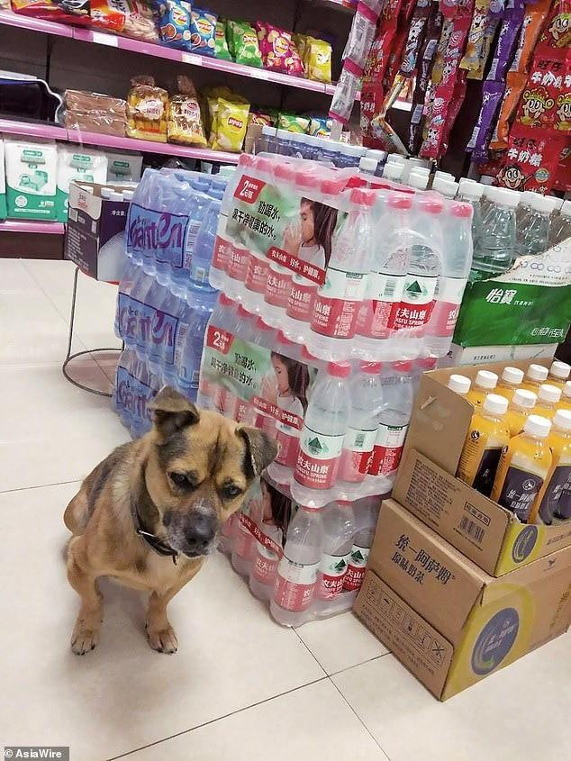 Không biết chủ đã chết vì COVID-19, chú chó kiên nhẫn đợi ở bệnh viện suốt 3 tháng ảnh 2