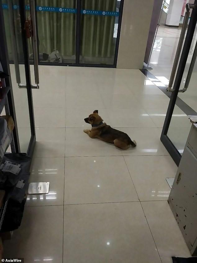 Không biết chủ đã chết vì COVID-19, chú chó kiên nhẫn đợi ở bệnh viện suốt 3 tháng ảnh 1