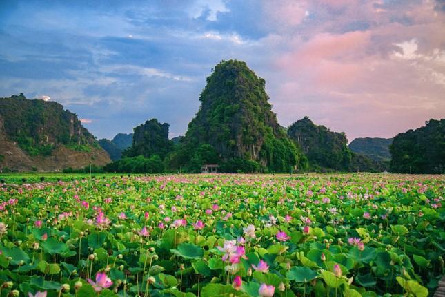 """Ngỡ ngàng hồ sen nở rộ giữa Thu ở Hang Múa (Ninh Bình), giới trẻ tha hồ chụp ảnh """"sống ảo"""" ảnh 2"""