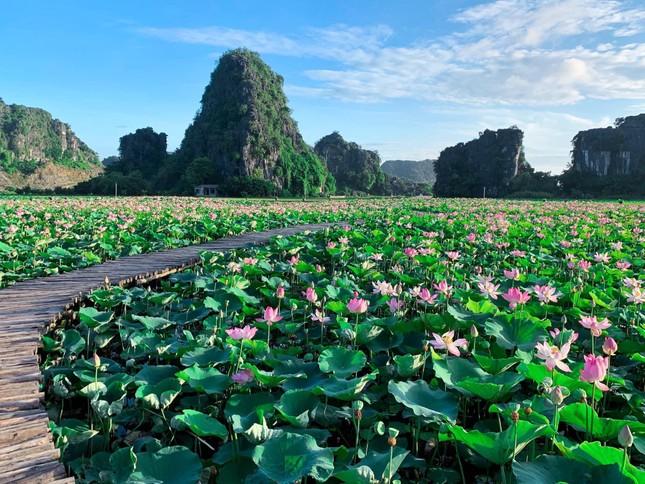 """Ngỡ ngàng hồ sen nở rộ giữa Thu ở Hang Múa (Ninh Bình), giới trẻ tha hồ chụp ảnh """"sống ảo"""" ảnh 1"""