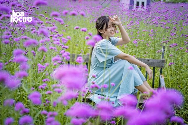 Giới trẻ Hà Nội rủ nhau check-in ở cánh đồng hoa oải hương rộng hàng chục nghìn mét vuông ảnh 8