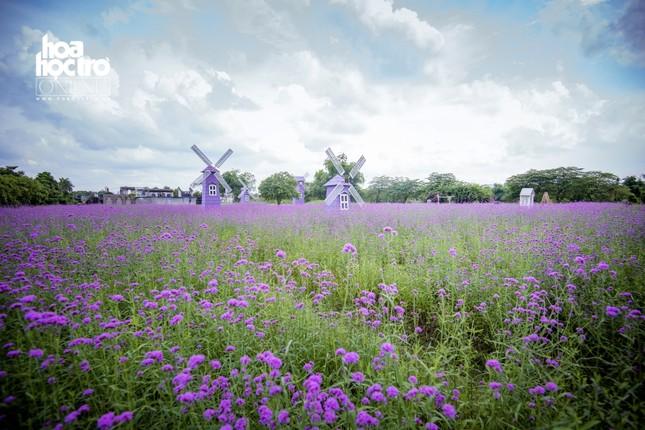 Giới trẻ Hà Nội rủ nhau check-in ở cánh đồng hoa oải hương rộng hàng chục nghìn mét vuông ảnh 6