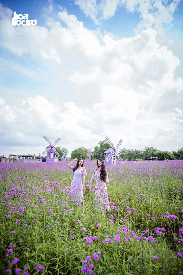 Giới trẻ Hà Nội rủ nhau check-in ở cánh đồng hoa oải hương rộng hàng chục nghìn mét vuông ảnh 5