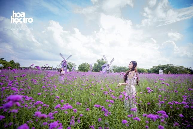 Giới trẻ Hà Nội rủ nhau check-in ở cánh đồng hoa oải hương rộng hàng chục nghìn mét vuông ảnh 4